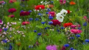 hqdefaultprairies fleuries amigoville