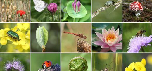 Panorama de la biodiversité