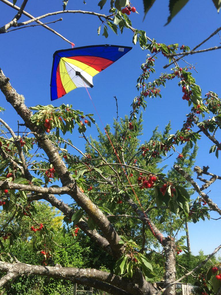 Effaroucher les oiseaux pilleurs de cerisiers